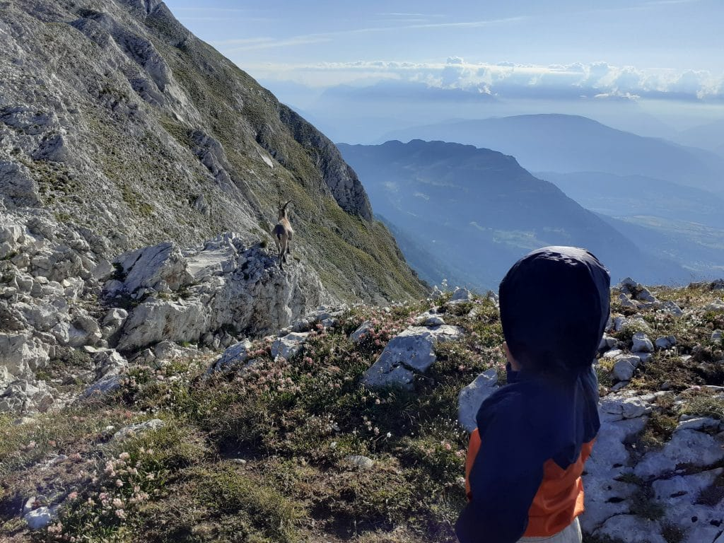 A kid watching an ibex