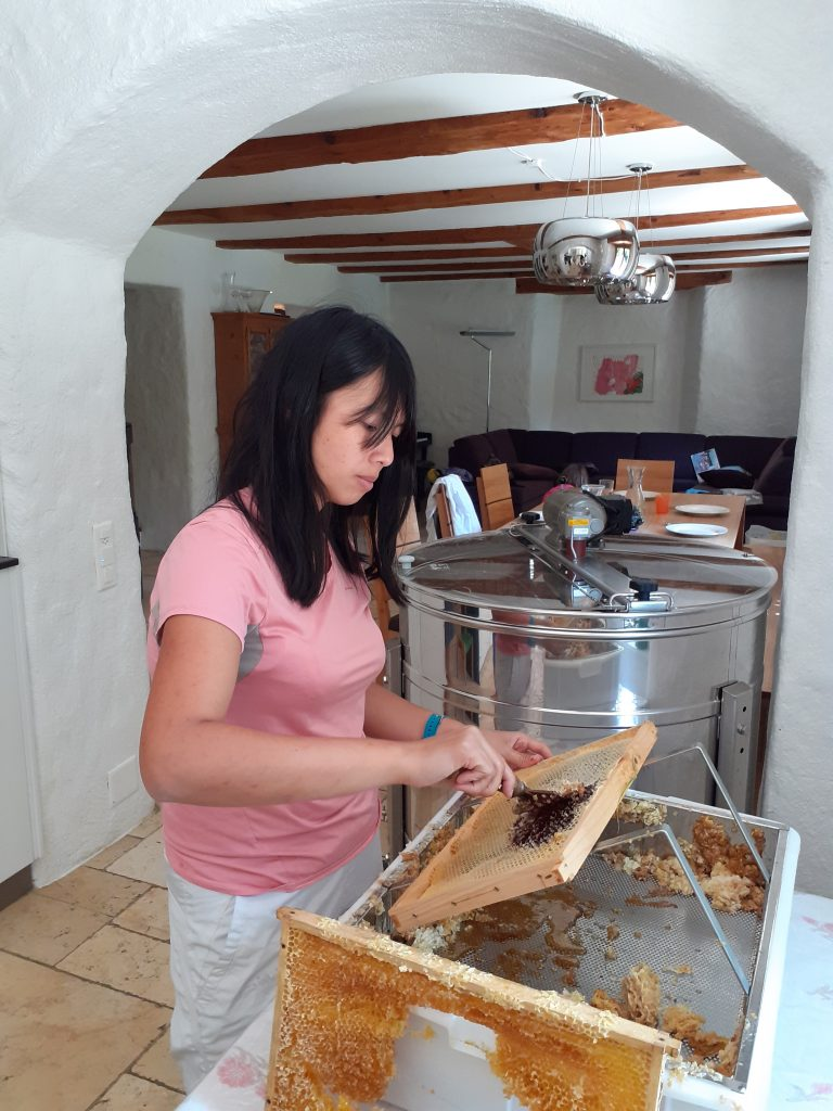 Our Helpx experience Bee-keeping